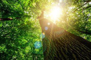 Forêt cabane val de loue